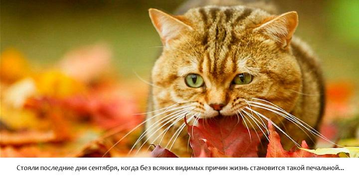 Осенний котик