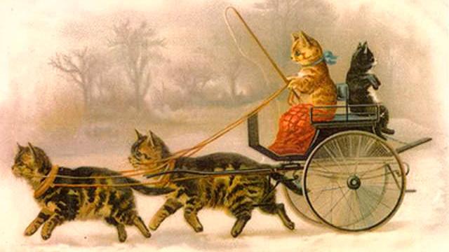коты в упряжке