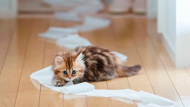 Долой лишние бумажки!