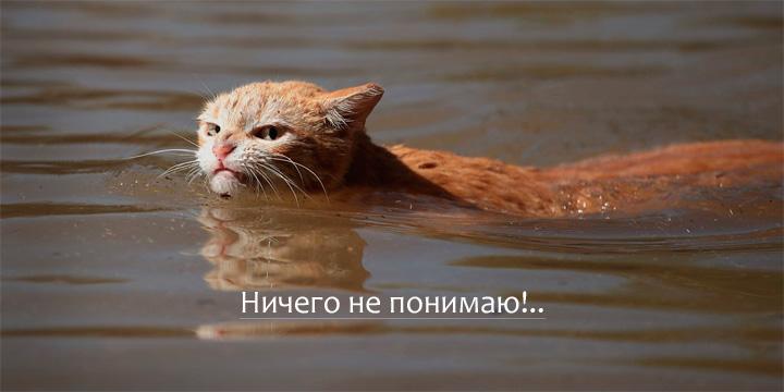 Крайне удивлённый кот. Ничего не понимаю!