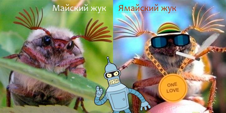 Неоднородные жуки